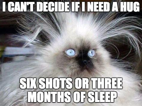 Stressed Out Memes - the gallery for gt stress cat meme