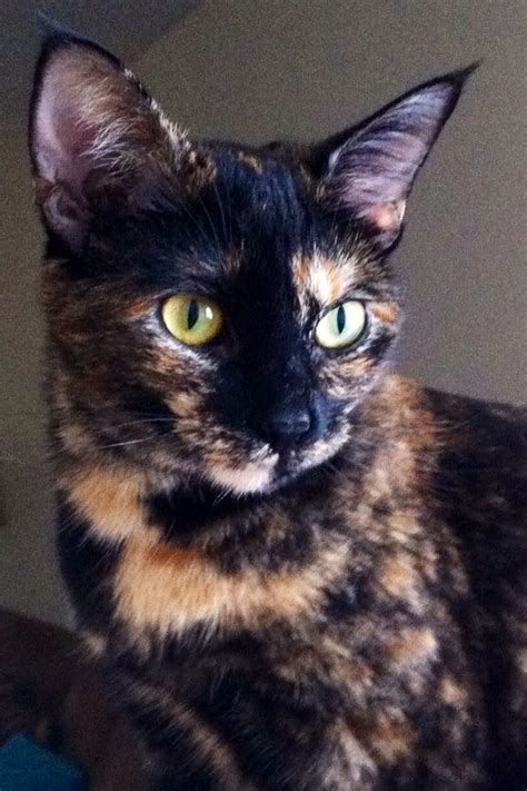 Show Me Your Cat Eye 5 by Tortie Cats I One And Will Never Not A Tortie