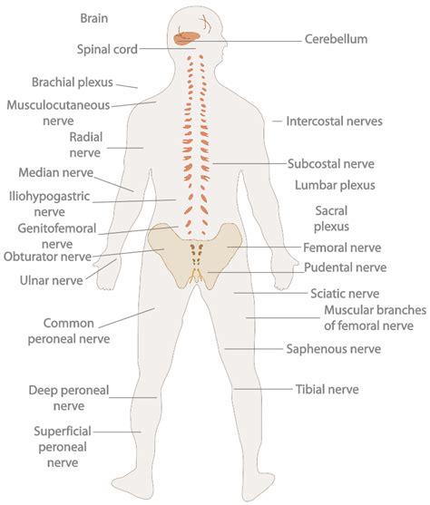 nerves of the human diagram keeping me awake at prana journal