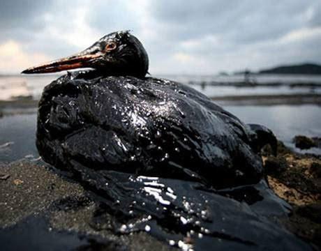 gulf coast bp oil spill destin okaloosa island florida