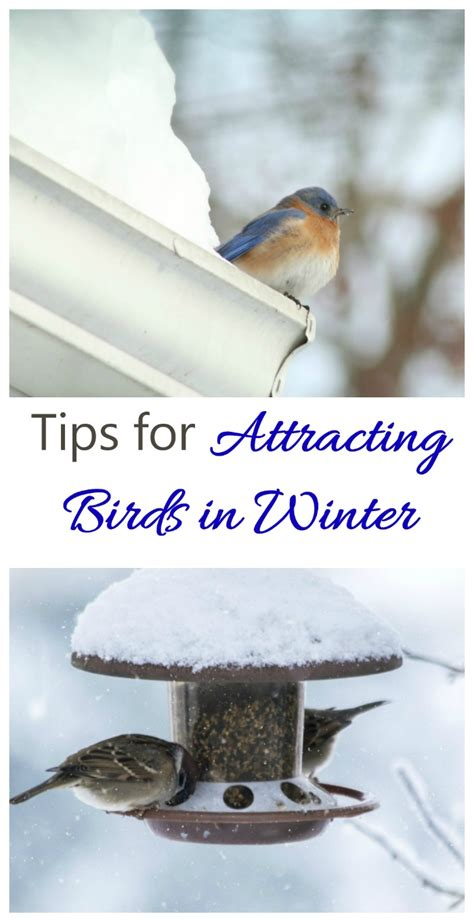 attracting birds in winter bird feeding tips for the