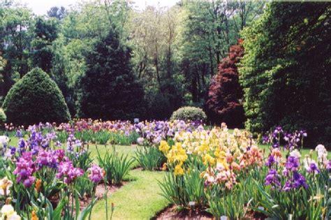 Iris Flower Garden Journal Garden Design Montreal Perennial Flower Gardens Gardening Tips Gardening Advice