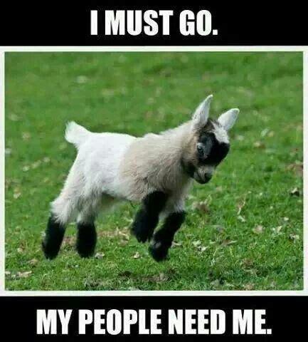 Goat Meme - wwfp page 2