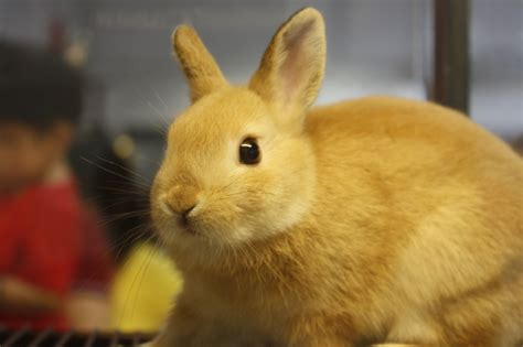 Golden Rabbit by Happy New Year Site