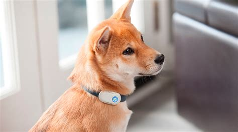gadgets for pets 4 must have tech gadgets for the pet obsessed the denizen