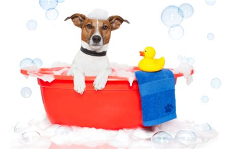 when can i bathe a puppy mobile grooming houston bath pricing houston tx