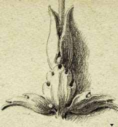1000+ images about acanthus on pinterest | how to draw