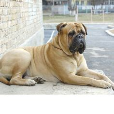 sandlot breed what breed of is in the sandlot breeds picture