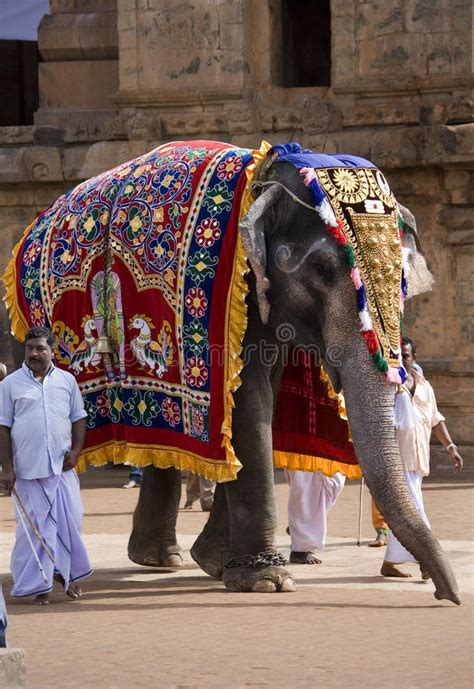 l 礬l礬phant se musique 201 l 233 phant de temple thanjavur tamil nadu inde photo