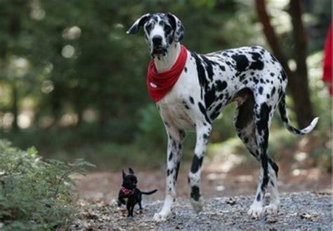 how do small dogs live do small dogs live longer tucson vet northwest pet clinic