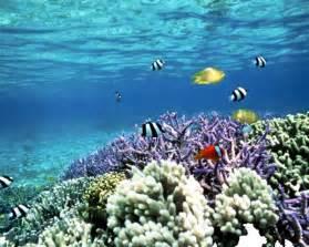 ocean reef fish