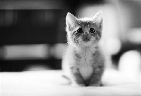 i love cats cute cat kitten pictures cute cat cute kittens 20 great pictures kitty bloger
