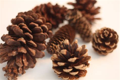 fireplace pine cones scented pine cone fire starters2 factory direct craft