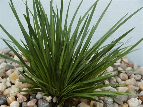 potted tropical plants 5 potted foreground live aquarium tropical plants ebay