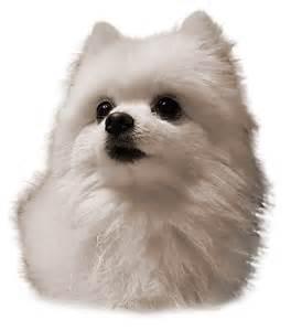 Home Decor Winnipeg Quot Gabe The Dog Birthday Quot By Kryptolith Redbubble