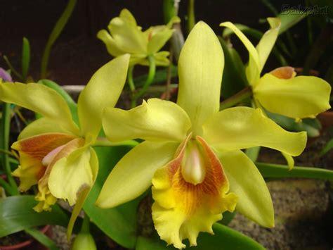 imagenes hermosas de orquideas fotos de orqu 237 deas flores e imagens cultura mix