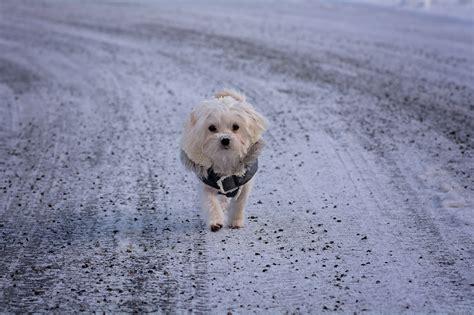 Kalung Imut Pasir gambar pasir salju musim dingin putih manis anak anjing imut kecil cuaca binatang