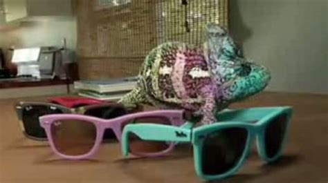 color changing lizard sunglass lizards the ban chameleon changes