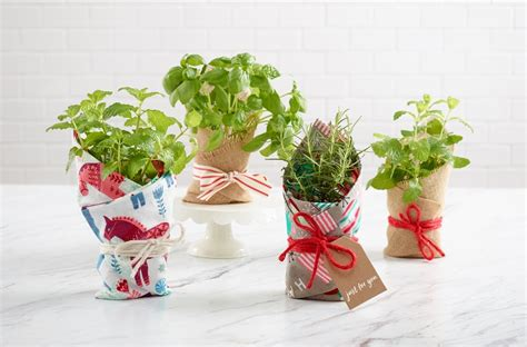 last minute diy christmas gift potted plant