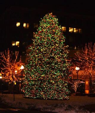salt lake christmas tree lots america s tallest trees travel leisure