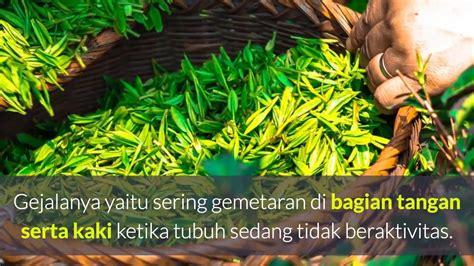 Teh Jenggot 13 manfaat teh hijau kepala jenggot untuk diet dan