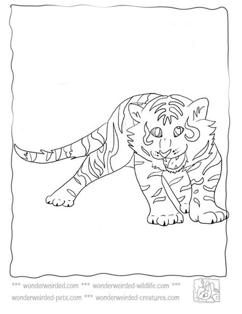 coloring pictures of baby tigers baby tiger coloring pages at www wonderweirded wildlife