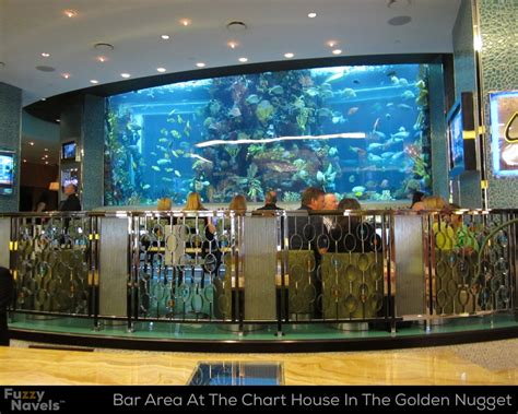 fish tank house bar seating area in front of huge aquarium at the chart house fuzzy navels