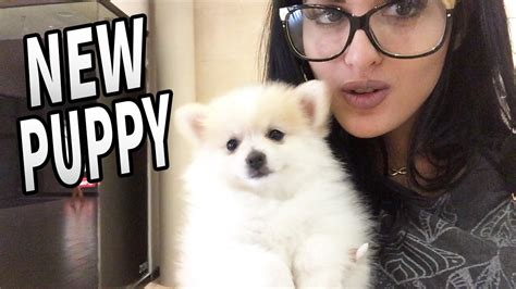 day with new puppy new puppy day in the of sssniperwolf 8 funnydog tv