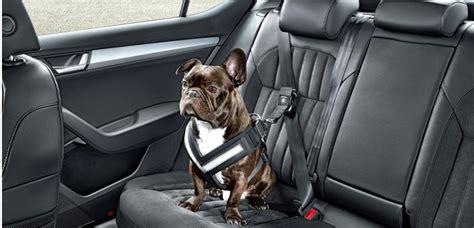 si鑒e auto pour chien transporter chien en voiture les 8 accessoires