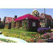 Did The Miracle Garden Of Dubai Live Up To Those Standards