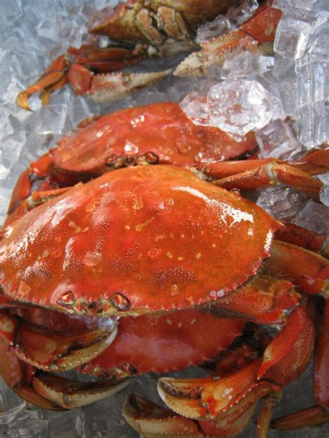 Whats In Season Dungeness Crabs by Fresh Dungeness Crab From Oregon City M Oregon