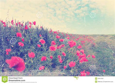 imagenes vintage rojas co de amapolas rojas vintage fotograf 237 a de archivo
