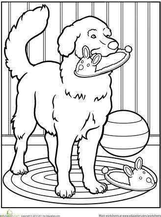 golden retriever coloring page 830 best coloring pages images on