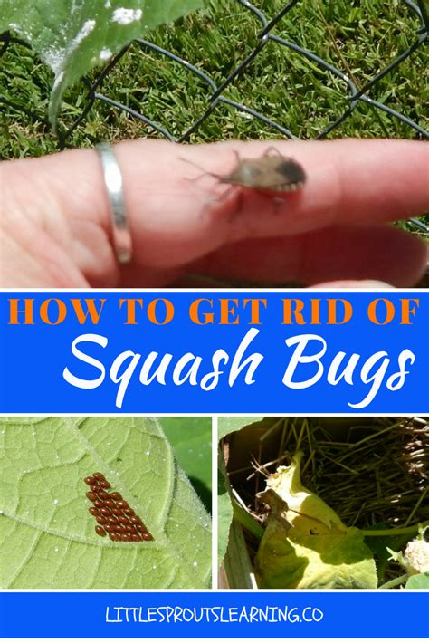 how to get rid of backyard bugs how to get rid of garden worms 28 images 311 best