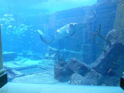 atlantis bahamas underwater rooms atlantis resort bahamas marine habitats loyalty traveler