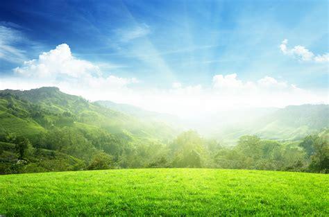 imagenes prados verdes prado verde