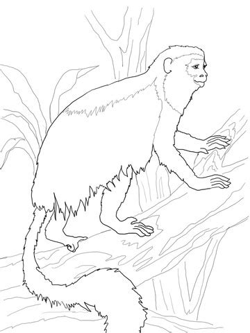 colobus monkey coloring page red colobus monkey coloring page free printable coloring