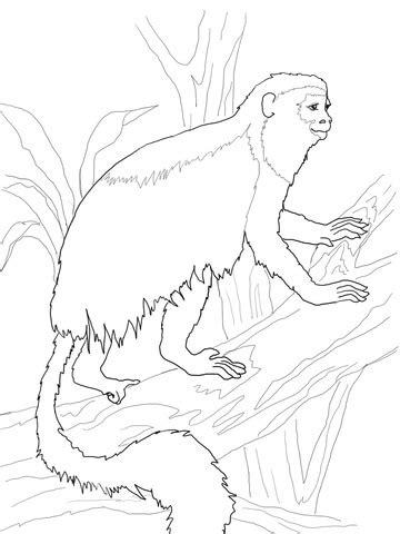 vervet monkey coloring page coloriage colobe coloriages 224 imprimer gratuits