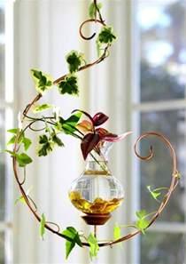 plante aquatique pour vase