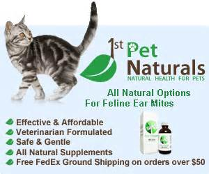 home remedies for ear mites ear mites in cats critter cures
