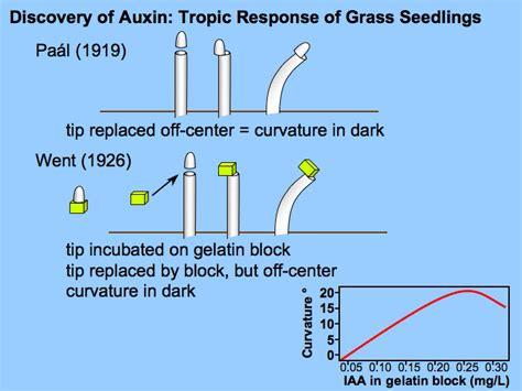Hormon Auxin plant biotech auxins