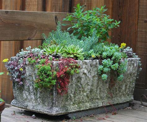 sedum container gardens creeping and crawling into 2016 pondside nursery