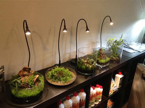 Wabi Kusa, een aquarium zonder water: tips van een expert