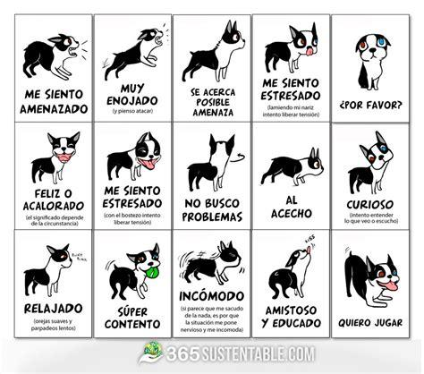 Calendario Canino 191 Sabes Qu 233 Intenta Decirte Tu Perro Aqu 237 Te Ense 241 Amos A