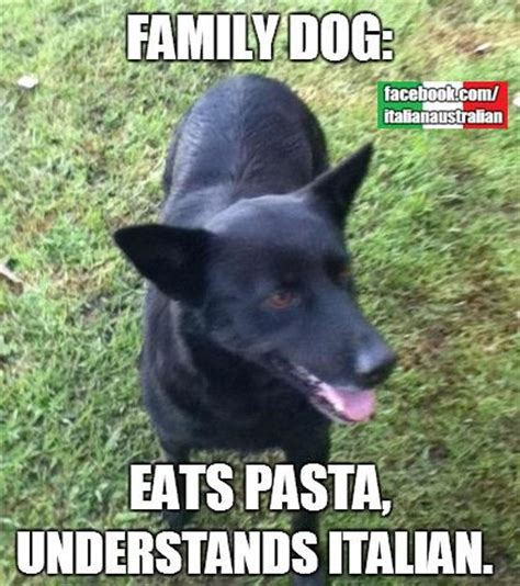Growing Up Italian Australian Memes - italian australian memes animals pinterest