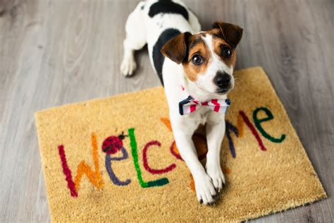 apartment friendly dogs how to find a pet friendly apartment renttabay