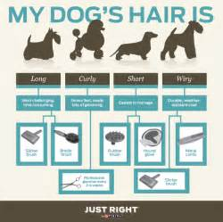 shedding season ahead how to manage your dog s fur this