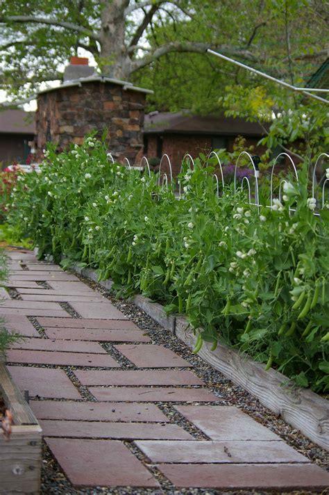 thinking  planting peas   fall  southwest idaho