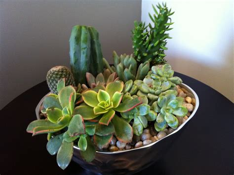 succulent arrangements design dump diy succulent arrangement