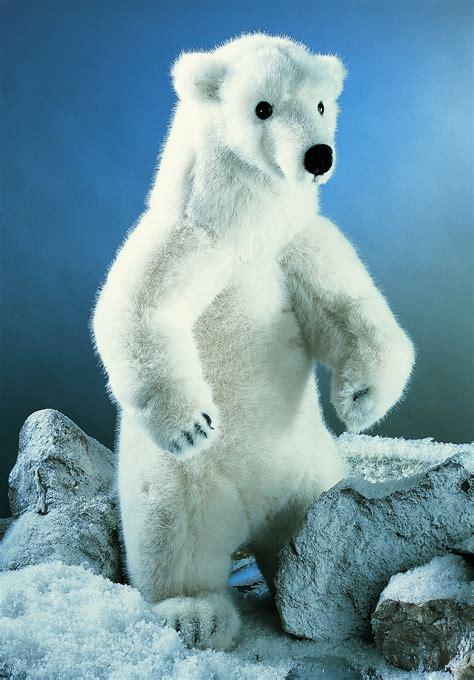 koesen usa  nanook polar bear